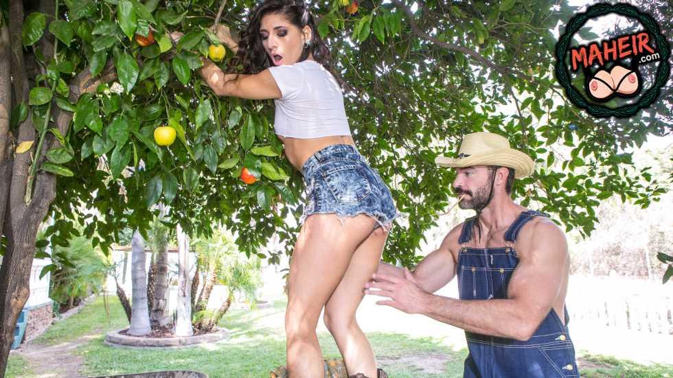 Yaramaz Hatun Ağaçtan Elma Çalarken Ev Sahibine Yakalandı